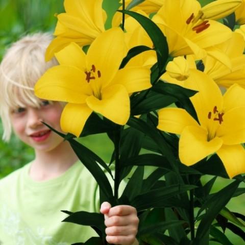 Лилия Yellow Planet фото