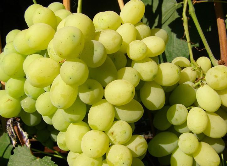 Купить виноградники купить квартиру в литве