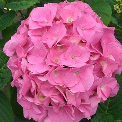 Доставка цветов донецк розита, букет невесты каскадный сиреневый фото