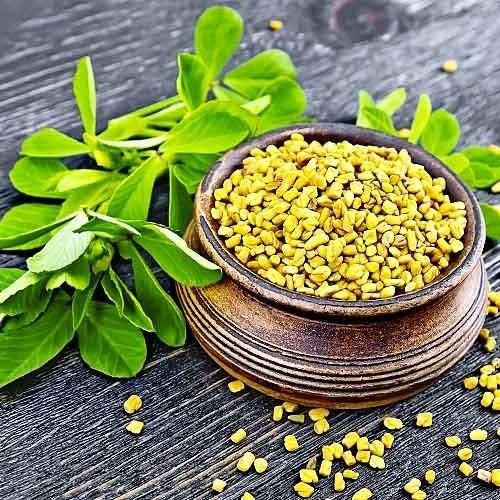 Пряная культура Пажитник - купить семена в Украине недорого   Florium.ua