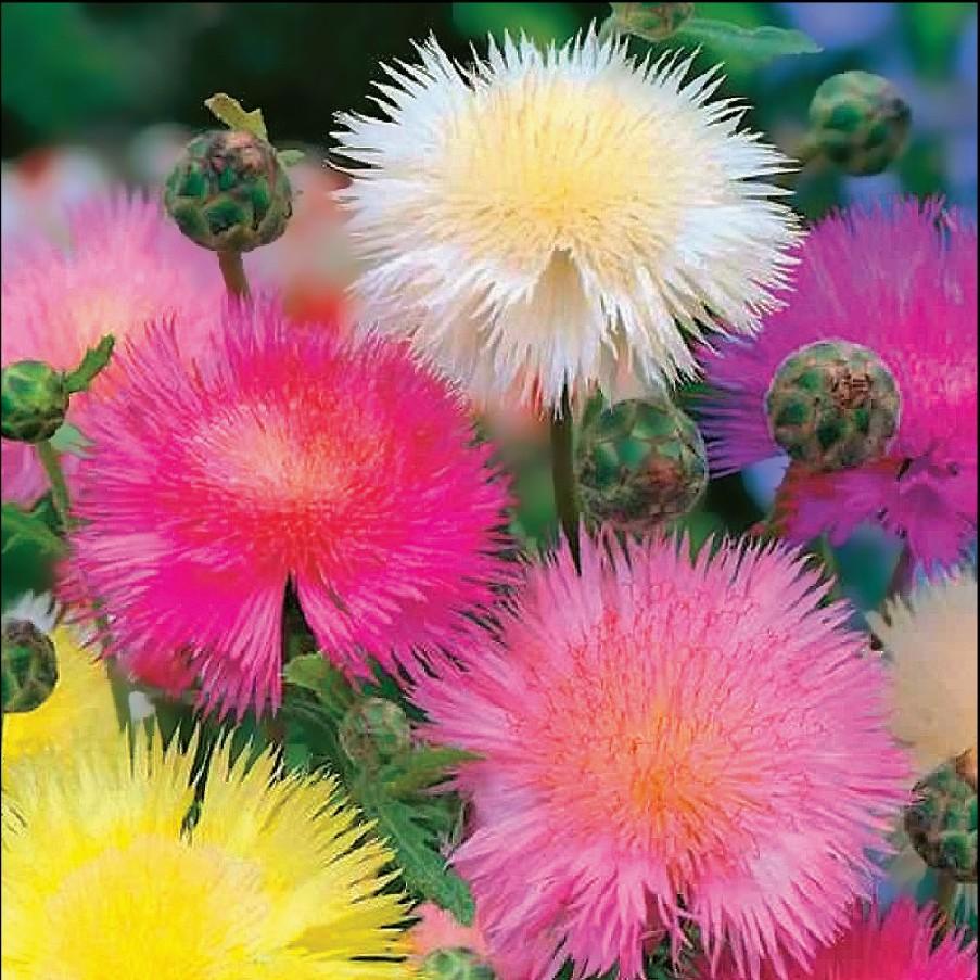 Картины цветы мира