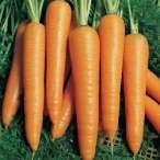 Купить - Морковь Вита Лонга