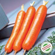 Морковь Дордонь F1, поздняя Нантский тип фото