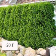 Брексил Комби (для туй и хвойных растений) фото