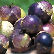 Физалис Фиолетовый фото