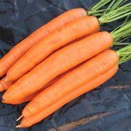 Морковь Берликумер фото