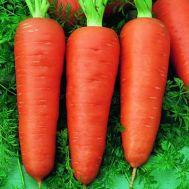 Морковь Долянка фото