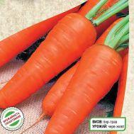 Морковь Кампино фото