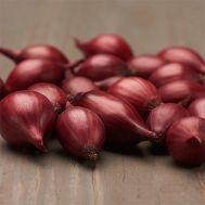 Лук Red Garnet фото