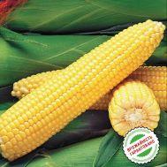Кукуруза Сахарная Оверленд F1 фото
