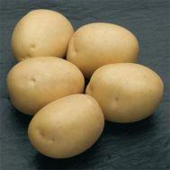 Картофель Сильвана (средне-ранний) фото