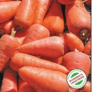 Морковь Редко  фото
