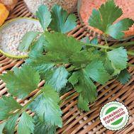 Сельдерей листовой фото