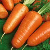 Морковь Шантане фото