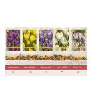 Шоубокс Крокусы Крупноцветковые фото