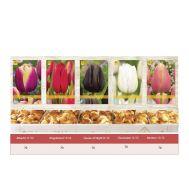 Шоубокс Тюльпаны Поздние фото