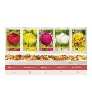 Шоубокс Тюльпаны Махровые фото