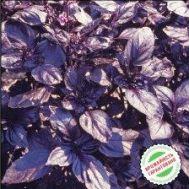 Базилик фиолетовый Тёмный опал фото