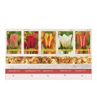 Шоубокс Тюльпаны Грейга фото