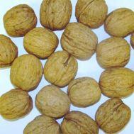 Грецкий орех Howard фото