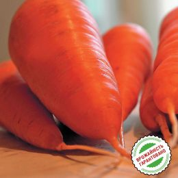 Морковь Болтекс, поздняя тип Шантане фото