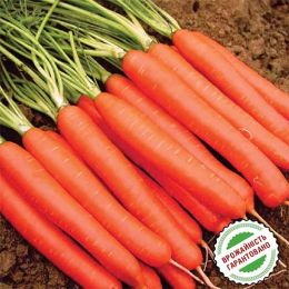 Морковь Рига F1 фото