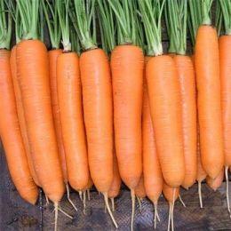 Морковь Сиркана фото
