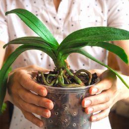 Кора для Орхидей Portugal 1л (8-12 мм)  фото