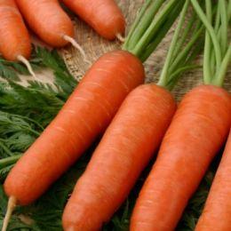 Морковь Карини фото