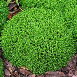 Хебе Green Globe фото