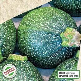 Кабачок Зеленый Шар фото