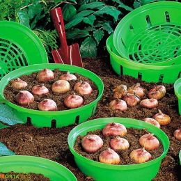Корзинка для луковиц круглая 23 см зеленая фото