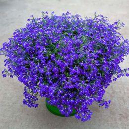 Лобелия Hot Blue фото