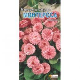 Маргаритка махровая Монтероса фото
