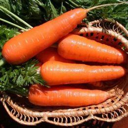 Морковь Московская зимняя фото