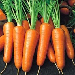 Морковь Роял Шансон фото