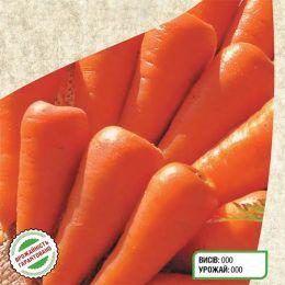 Морковь Шантане Роял фото