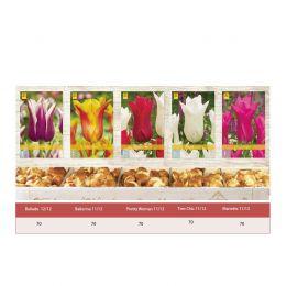 Шоубокс Тюльпаны Лилиецветные фото