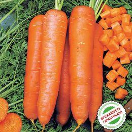 Морковь Скарла фото