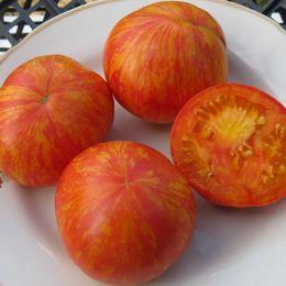 Томат Зебра оранжевая фото