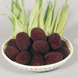 Кукуруза Strawberry Corn фото