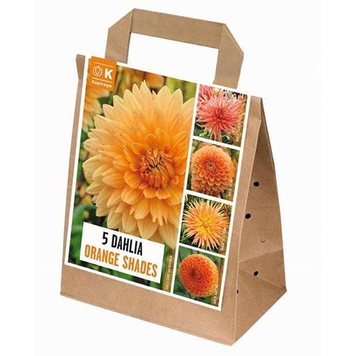 Купить Цибулини Kapiteyn, 100 днів цвітіння жоржин Shades of Orange (Брендові цибулини KAPITEYN®)
