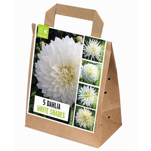 Цибулини Kapiteyn, 100 днів цвітіння жоржин Shades of White (Брендові цибулини KAPITEYN®)  - купить со скидкой