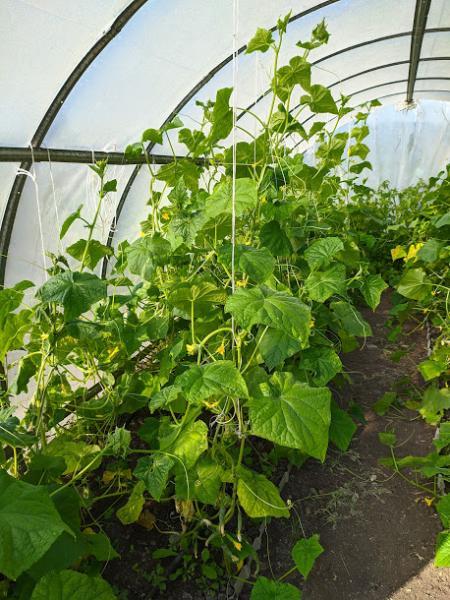Florium Ua интернет магазин семена