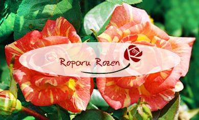 Саженцы роз Ропару