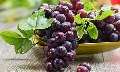 саженцы винограда в украине