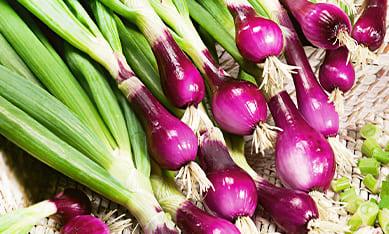фиолетовый лук голландский