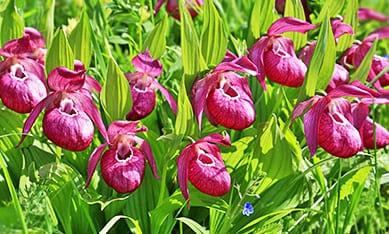 Саженцы орхидей садовых изображение