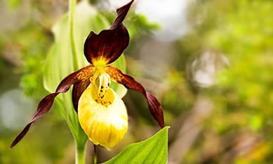 Саженцы орхидей