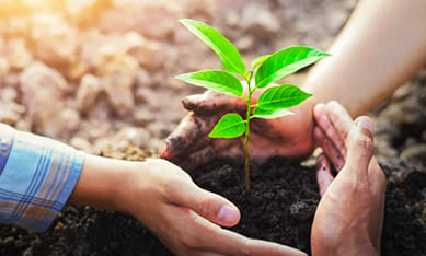 препараты для защиты растений